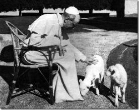 Pio XII corderos