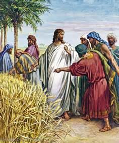 Jesús recoge espigas en sábado